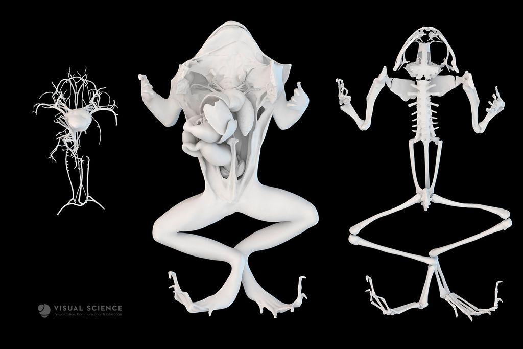 anatomy-systemsvisual-sceince